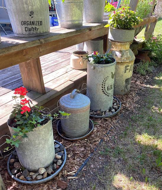 Photo of chicken feeders & milk cans in a junk garden