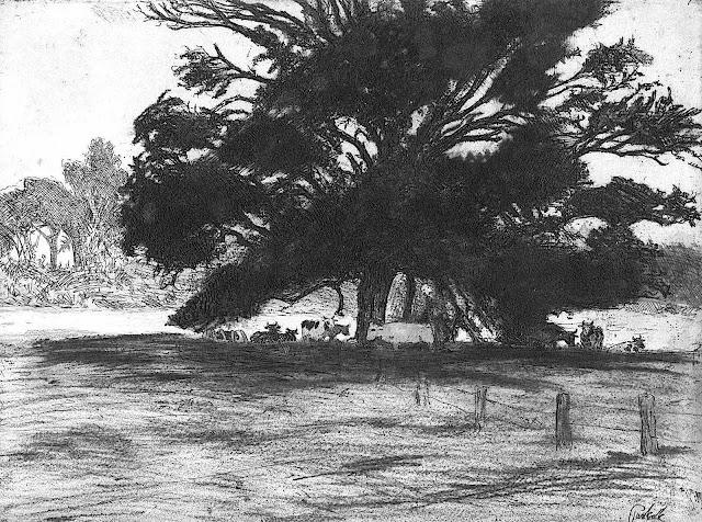Bernard Pankok, a large shade tree sheltering cows