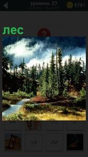 В летнем лесу в солнечную погоду стоят одинокие деревья и протекает небольшой ручей