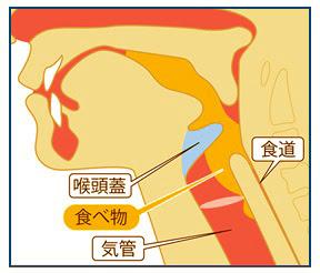 喉頭蓋と「のみこむ力」