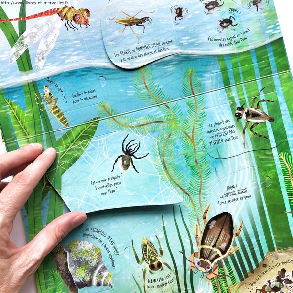 Fenêtre sur papillons et autres petites bêtes - Usborne