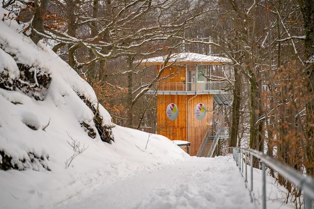 Winterwandern in Bad Harzburg | Kleiner und Großer Burgberg und Besinnungsweg | Baumschwebebahn | Wandern im Harz 14