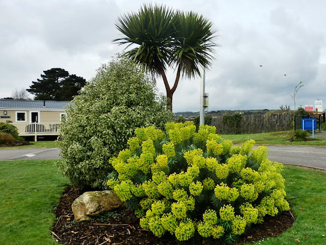 Palm Tree and Centre Piece at Par Sands, Cornwall
