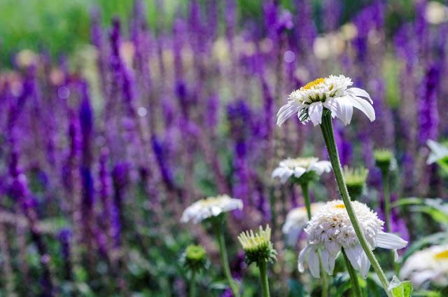 plantas vivaces, jardines de flores, diseño de jardines, paisajistas
