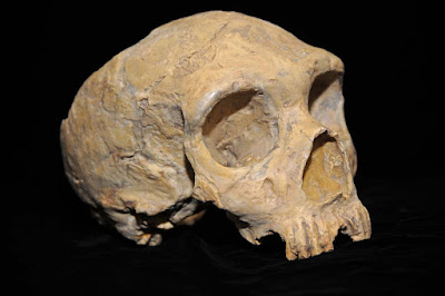 Neanderthals may have been infected by diseases carried out of Africa by modern humans