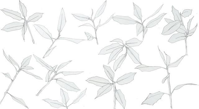 hojas, encina, dibujo