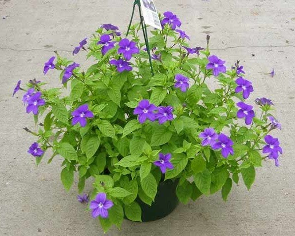 Unadvisable Plants That You Probably Have In Your House