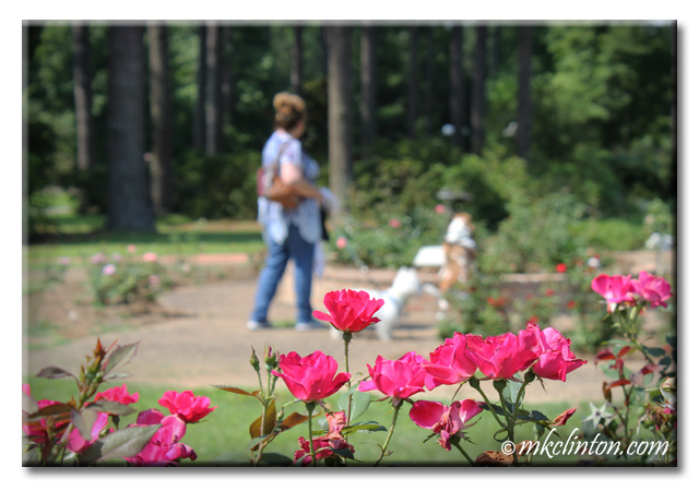Womand and her two dogs at the American Rose Center