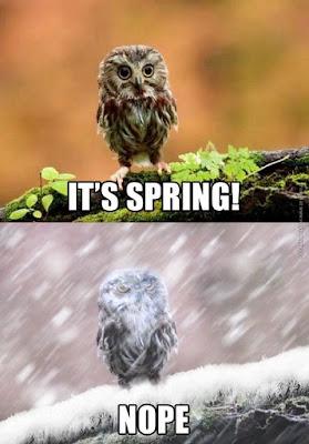 Owl Nope meme