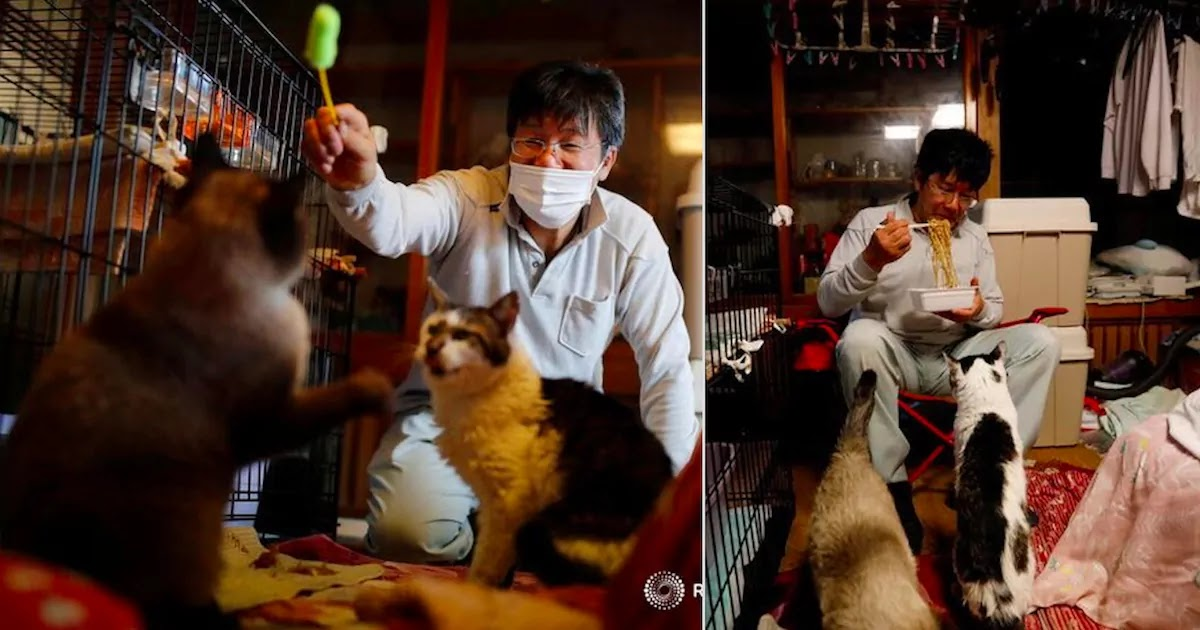 Japanese Man Has Spent 10 Years Saving Cats Left Behind After The Fukushima Nuclear Disaster