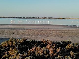 flamingoes in the Larnaka Salt Lake
