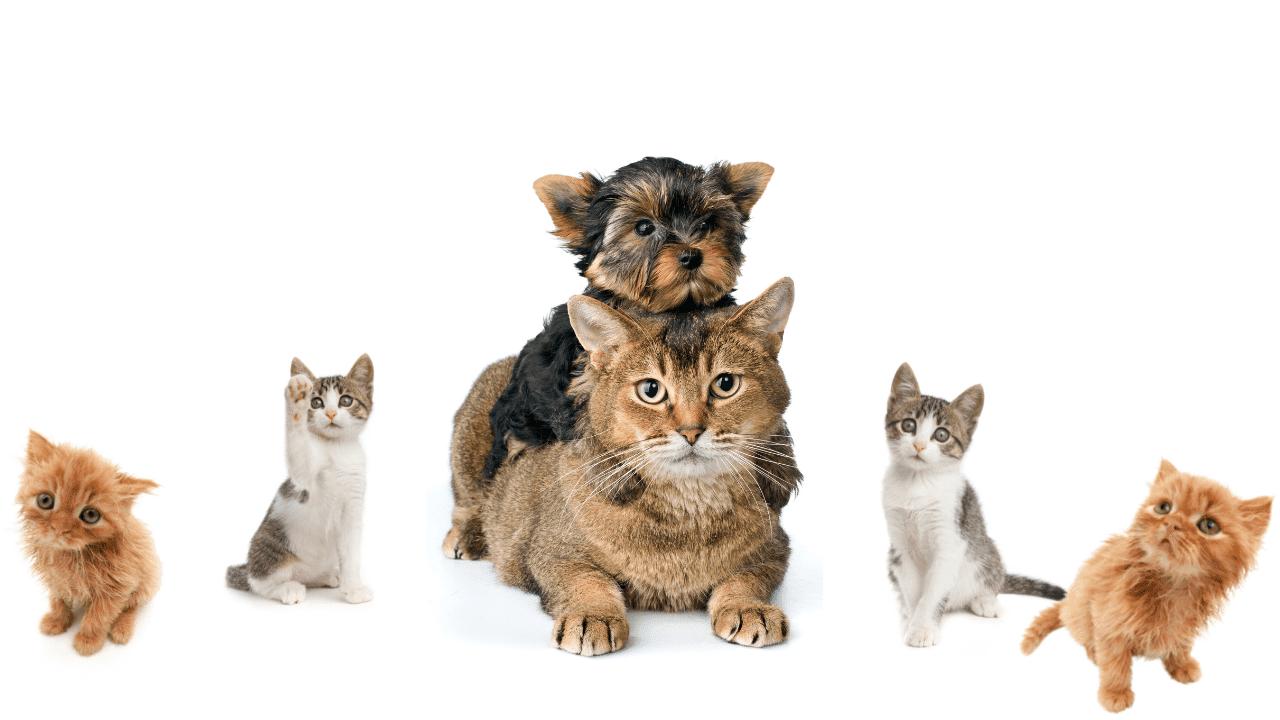 gato con una cachoirro de perro
