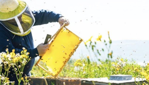 Honey production in Albania increases by 56% in a decade, rugged mountainous terrain is favorable