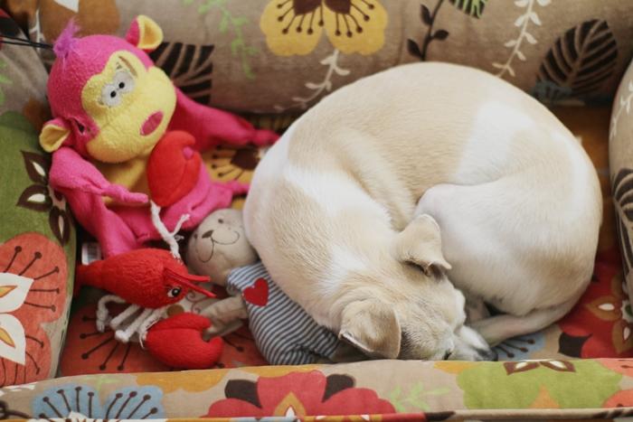 Orthopaedic Dog Bed Site Petsmart Com