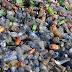 Τέλος όλα τα πλαστικά προϊόντα σε δύο χρόνια - Δείτε τη λίστα των «απαγορευμένων»