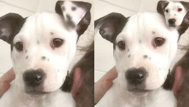 Awesome Dog With An Ear Selfie Gone Viral