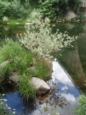 jardín natural en el río Jerte