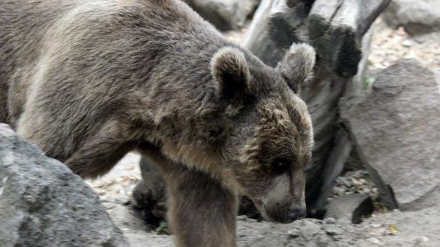 Múmia de um urso antigo