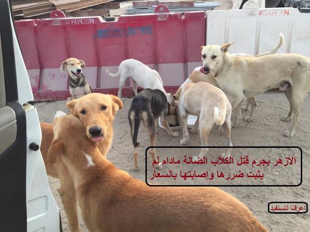 الأزهر يجرم قتل الكلاب الضالة