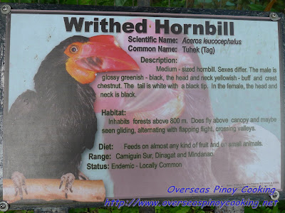 The Writhed Horhbill Bird
