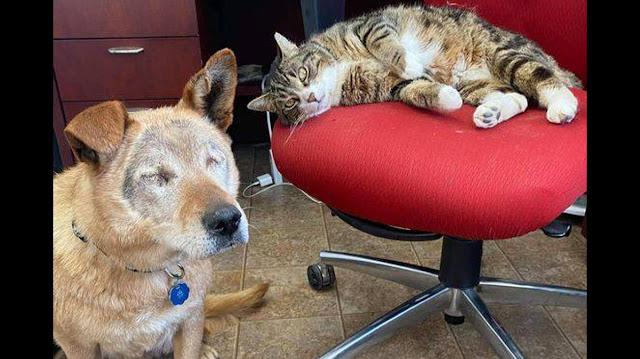 Бездомный пёс потерял зрение, но обрёл поводыря, дружба с которым обошла все законы природы