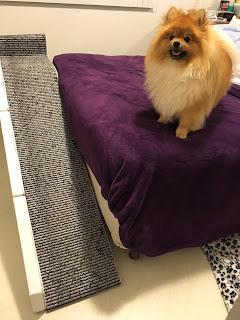rampas cama altas