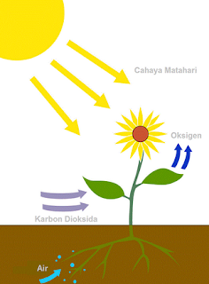 Fotosintesis : Pengertian, Fungsi, Proses, Tahapan serta Faktor