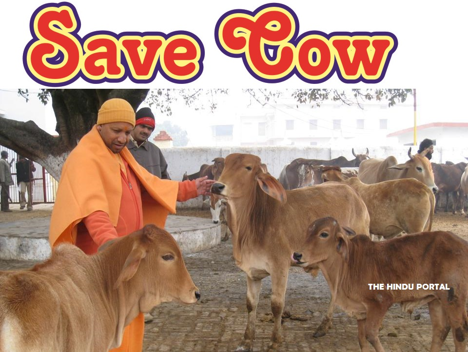 A NewTechnology to Save Cow - SaveCow.com MicroChip to stop cow smuggling!