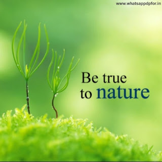 amazing pictures of nature free download