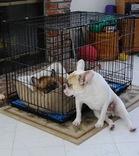 gaiolas para cães