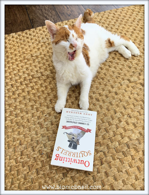 Feline Fiction on Fridays #129 ©BionicBasil® Outwitting Squirrels - Amber's Library Copy