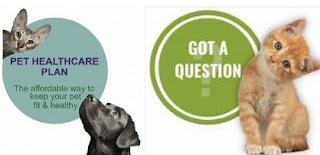 Pet медичне страхування для кішок-варто невелику щомісячну плату