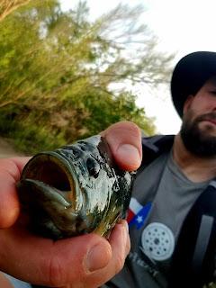 Suburban Escape, Urban Fly Fishing Texas, retention pond fly fishing, Texas Freshwater Fly Fishing, Fly Fishing Texas, Texas Fly Fishing
