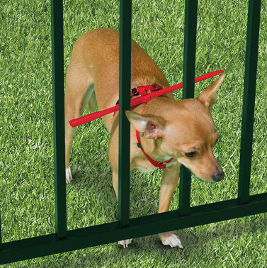 Prevent dog escapes through fence tips and ideas picture