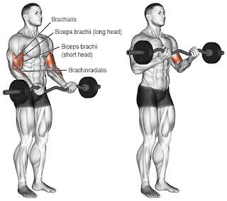 Top 5 Exercises To Build Biceps, EZ BAR CURLS