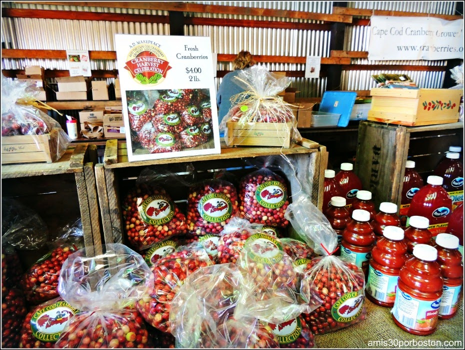 Cosecha De Arándanos en Wareham: Ocean Spray Cranberries