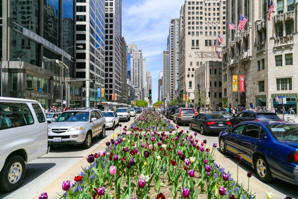 things to do in chicago today