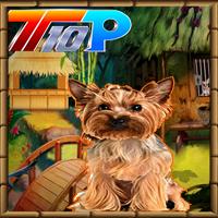Top10NewGames Rescue The Cute Puppy