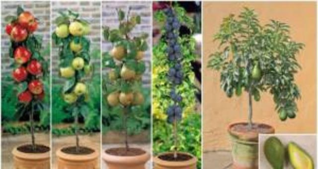 Fabulosa técnica para hacer un mini jardín en casa y cultivar tus frutas preferidas.