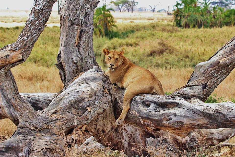 Leoni safari Tanzania