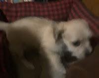 Zeus when he was a puppy.