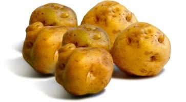 Yellow Potato, Potatoes Peru, 3.000 varieties of potatoe, Peru and the potatoe native