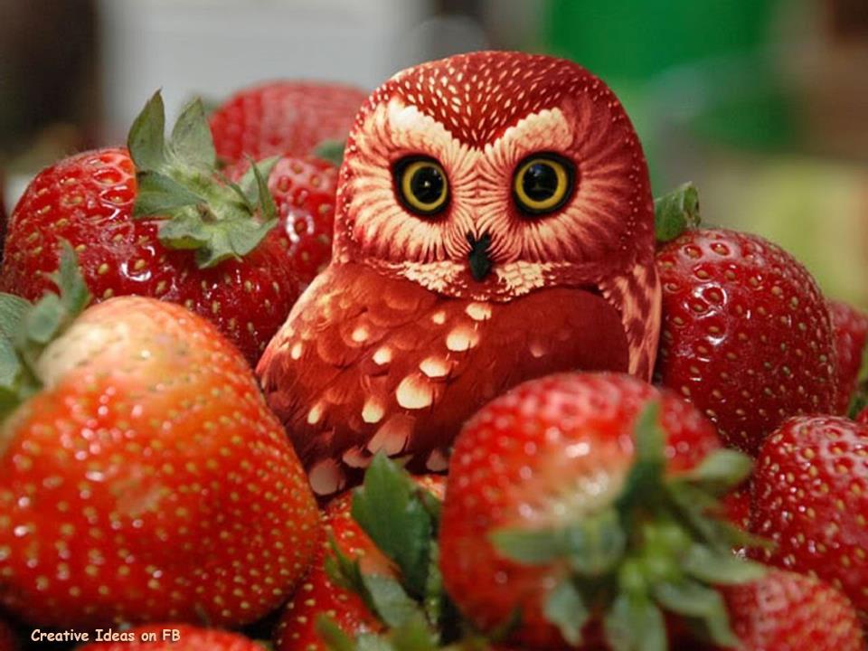strawberi diukir menyerupai burung hantu