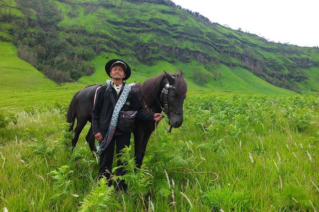 Kuda ini menjadi salah satu kuda yang disewakan di kawasan bromo