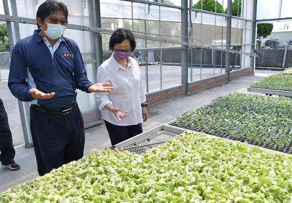 王惠美關心蔬菜育苗產業困境 籲中央提供農業紓困方案