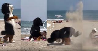 Rémi Gaillard, Funny Videos
