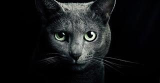 Γάτα – προστατεύει εσάς και το σπίτι σας από φαντάσματα και αρνητικά πνεύματα!