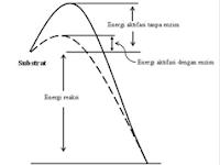Soal 1 Metabolisme Tipe Ujian Nasional Beserta Jawabannya