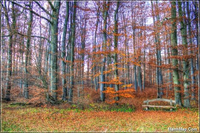 hoài niệm về mùa thu xưa