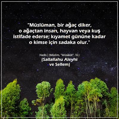 ağaç, hadis. tema, orman bakanlığı, hz. Muhammed, peygamber tavsiyesi, ağaç dikmek, gökyüzü, yıldızlar, nesef almak